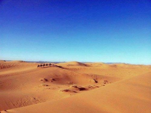 Caravane Desert Morocco